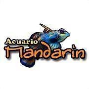 Logo 5) Acuario Mandarin