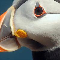 Logo 3) Scottish Seabird Centre