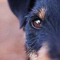 Logo 27) Laetus Canis - Varstvo In Oskrba Psov