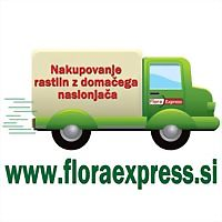 Logo 36) Floraexpress.si