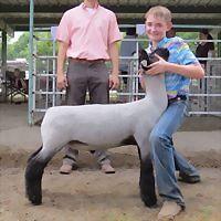 Logo 6) Brillhart-Slater Show Lambs & Brillhart Show Goats
