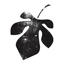 Logo 21) Alasti Kino